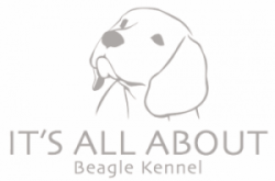 It´s all about beagles