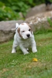 Alovis Snoopy