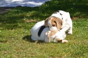 Alovis Snoopy & Adora