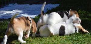 Aruby, Adora & Alovis Snoopy